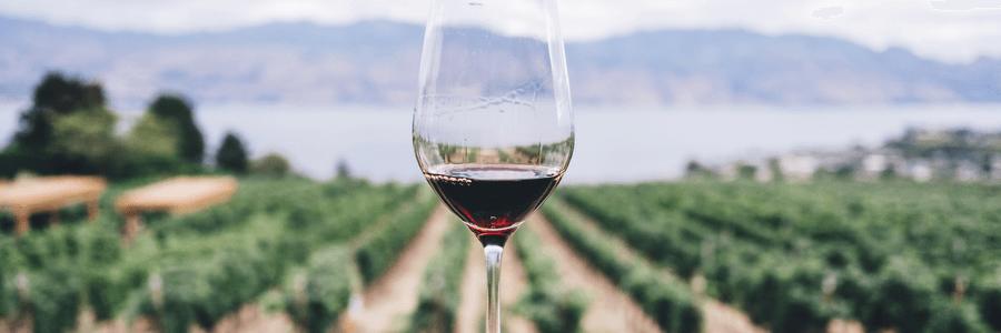 Spain Wines
